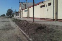 Reemplazarán la totalidad de los árboles  del Geriátrico de Barrio Central Argentino