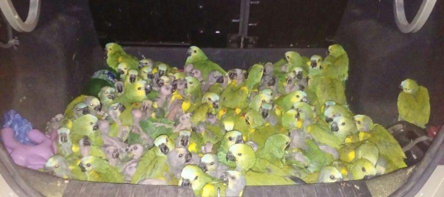 Secuestraron numerosas aves silvestres y de corral