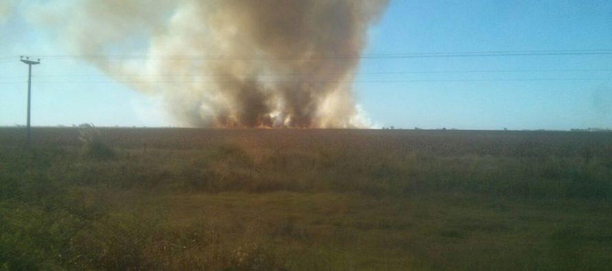 Arduo trabajo de bomberos de Las Varillas y Alicia por incendio de un maizal