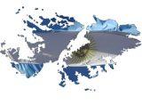 Acto evocativo por Malvinas, el domingo en barrio 2 de Abril
