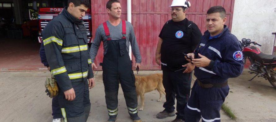 El Jefe de Bomberos no descartó ninguna hipótesis sobre el origen del incendio en el Circuito