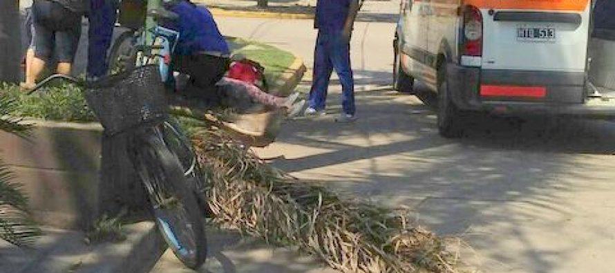Una rama de palmera cayó sobre una persona