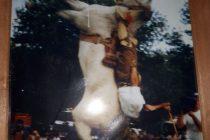 Murió un legendario animal de la Tropilla El Relincho