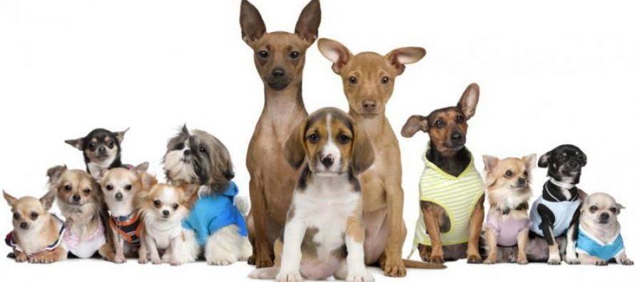 Este sábado, Censo Canino en Las Varillas