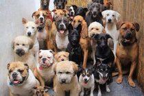 A mediados de mayo podrían estar los resultados del Censo Canino
