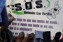 El Grupo S.O.S animales denunció hartazgo e insensibilidad hacia su trabajo voluntario