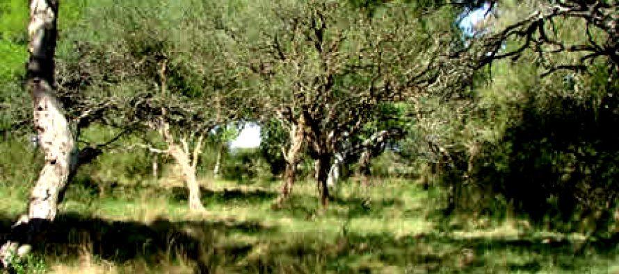 La Provincia tiene proyectado plantar 30 millones de árboles en 10 años