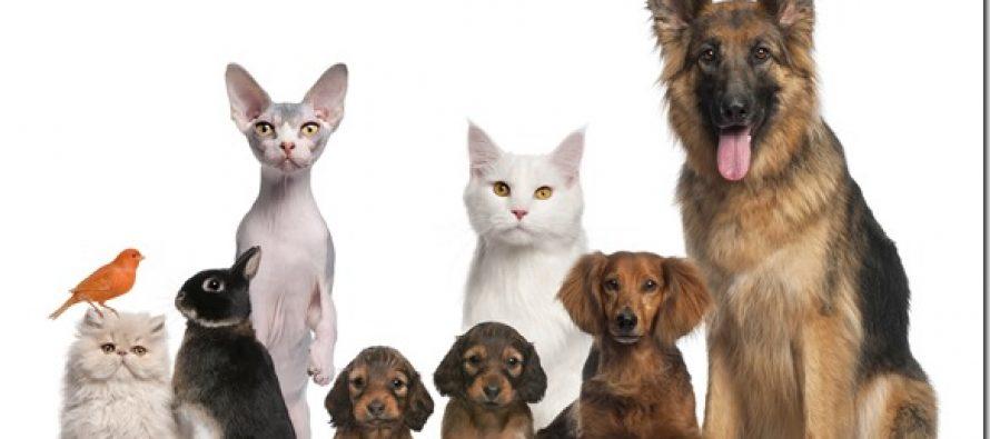 Cambio de lugar para los festejos por el Día del Animal