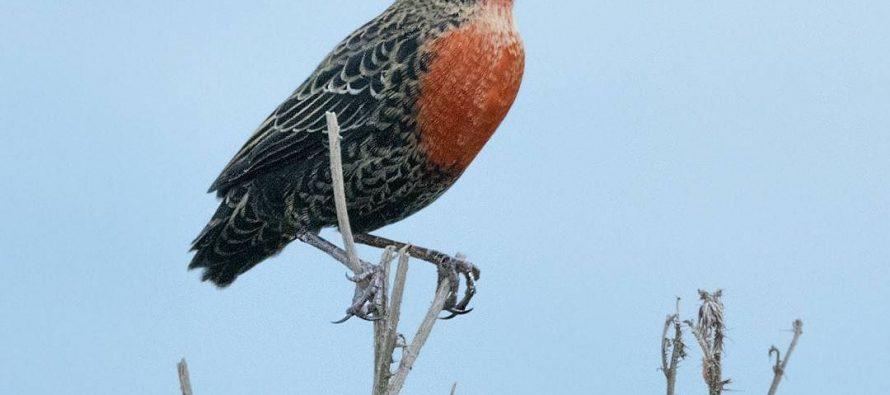 Taller sobre aves silvestres de los alrededores de Las Varillas