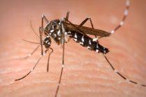 Controlarán espejos de agua que rodean a la ciudad para evitar la proliferación de mosquitos
