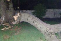 Árbol cayó en el patio de 4 viviendas