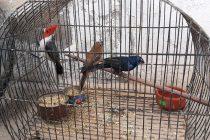 Villa María: rescataron 50 animales silvestres que estaban listos para ser comercializados