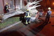 Un árbol cayó sobre un vehículo en calle Chaco de Las Varillas