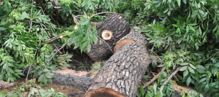 Cómo solicitar permiso para extracción de árboles